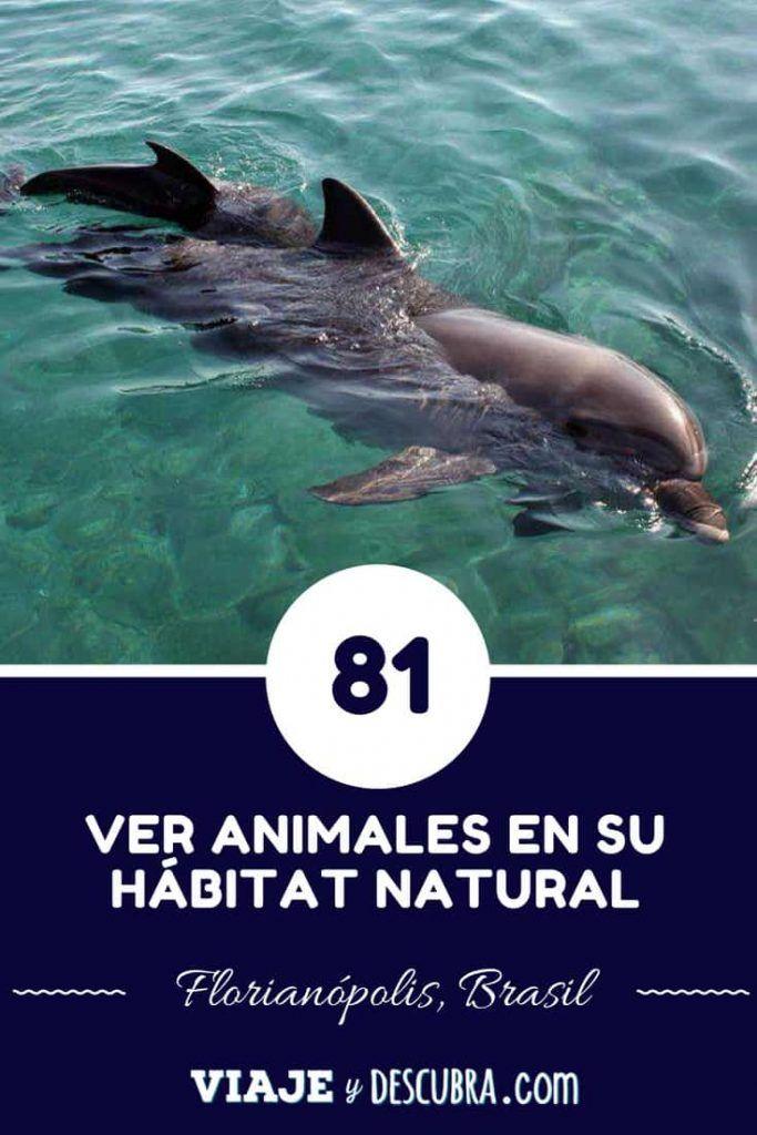 100 razones para viajar, viajeydescubra, delfines, florianopolis, brasil
