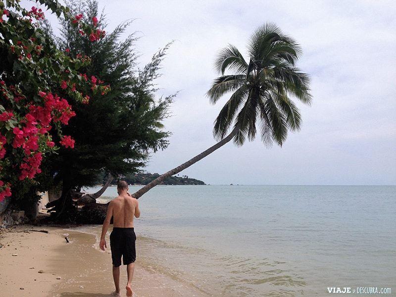 Koh-Samui,-Tailandia,-islas,-playa,-asia,-lamai-beach,-palmeras