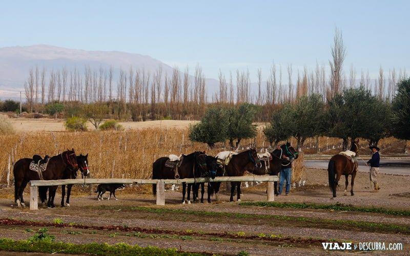 La estancia de Cafayate, Grace Cafayate, bespoke, cabalgata, dunas, Salta, viajeydescubra