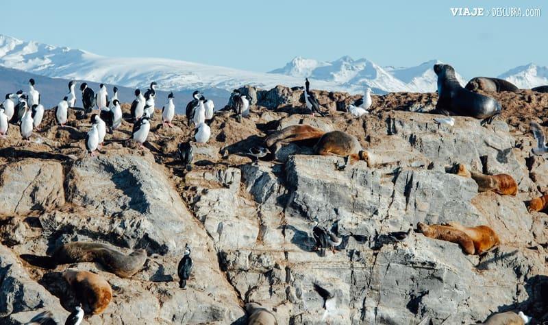 Navegacion-Canal-Beagle,-Tolkeyen,-viajeydescubra,-isla-de-los-lobos