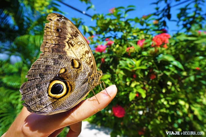 aruba,-mariposario,-butterfly-farm,-granja-de-mariposas,-que-hacer-en-Aruba,-imperdibles-Aruba