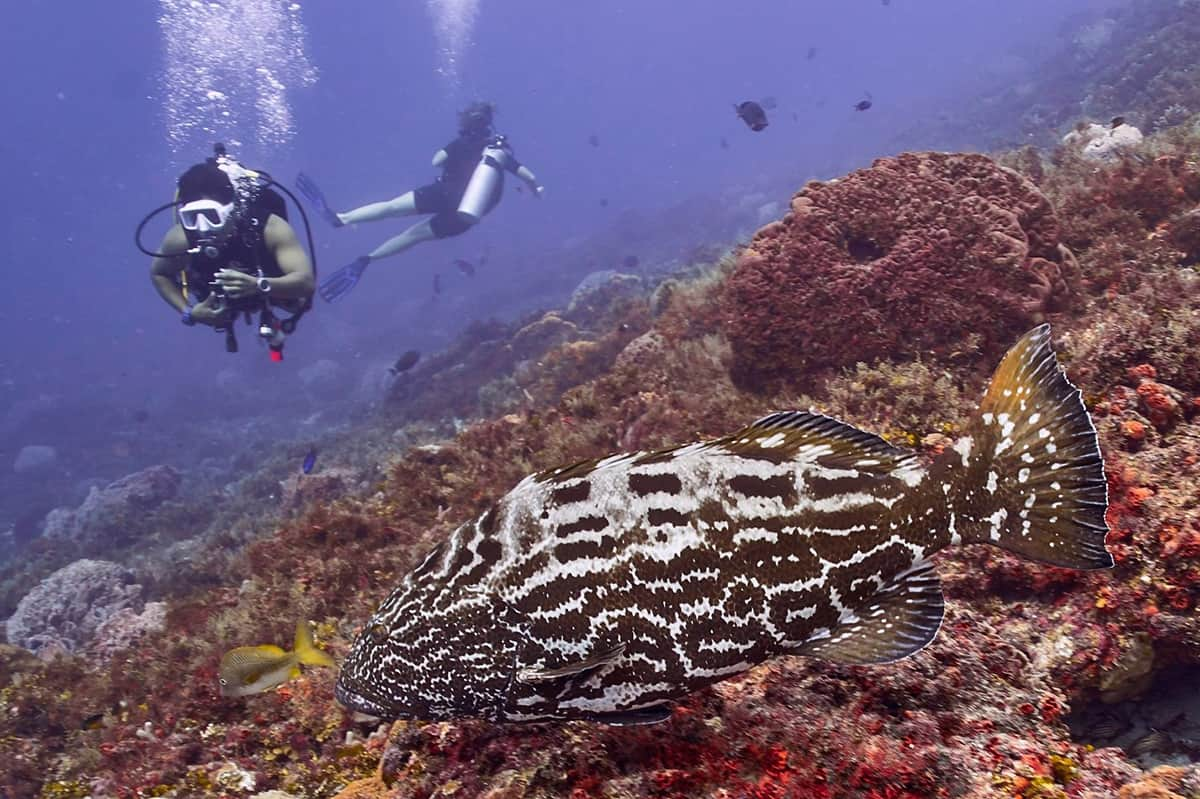 buceo,-diving,-cozumel,-scubatony,-mexico,-viajeydescubra,-dive-master,-open-water