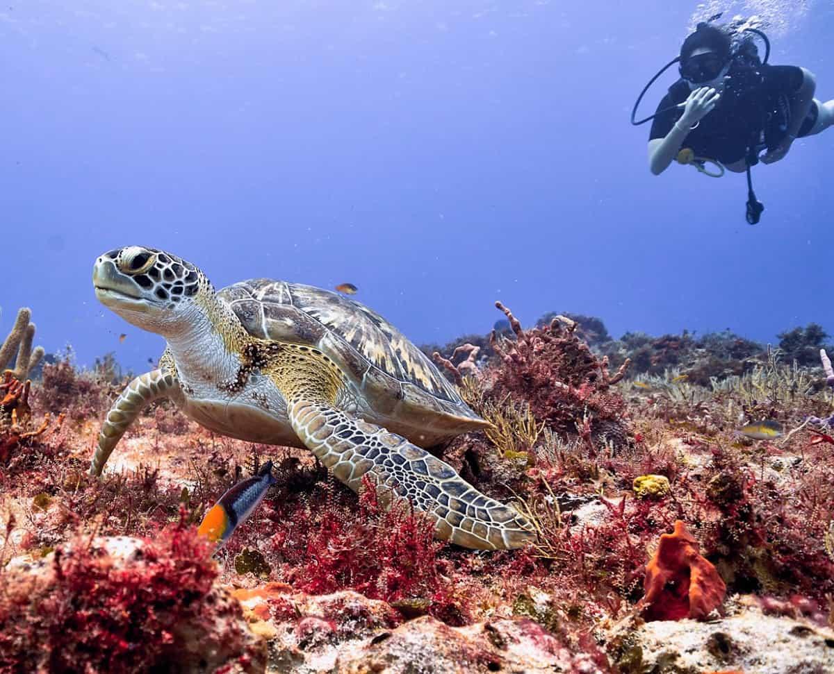 buceo,-diving,-cozumel,-scubatony,-mexico,-viajeydescubra,-flor-zaccagnino,-tortuga-marina