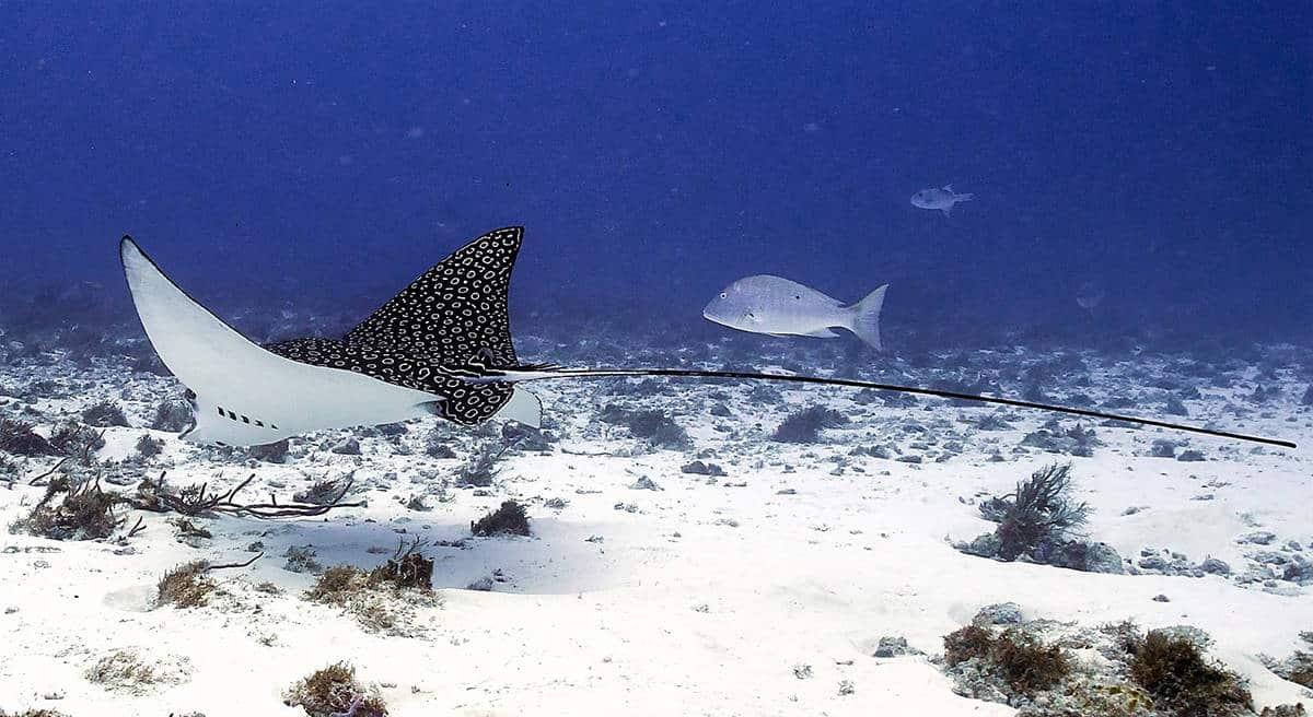 buceo,-diving,-cozumel,-scubatony,-mexico,-viajeydescubra,-raya,-mantaraya
