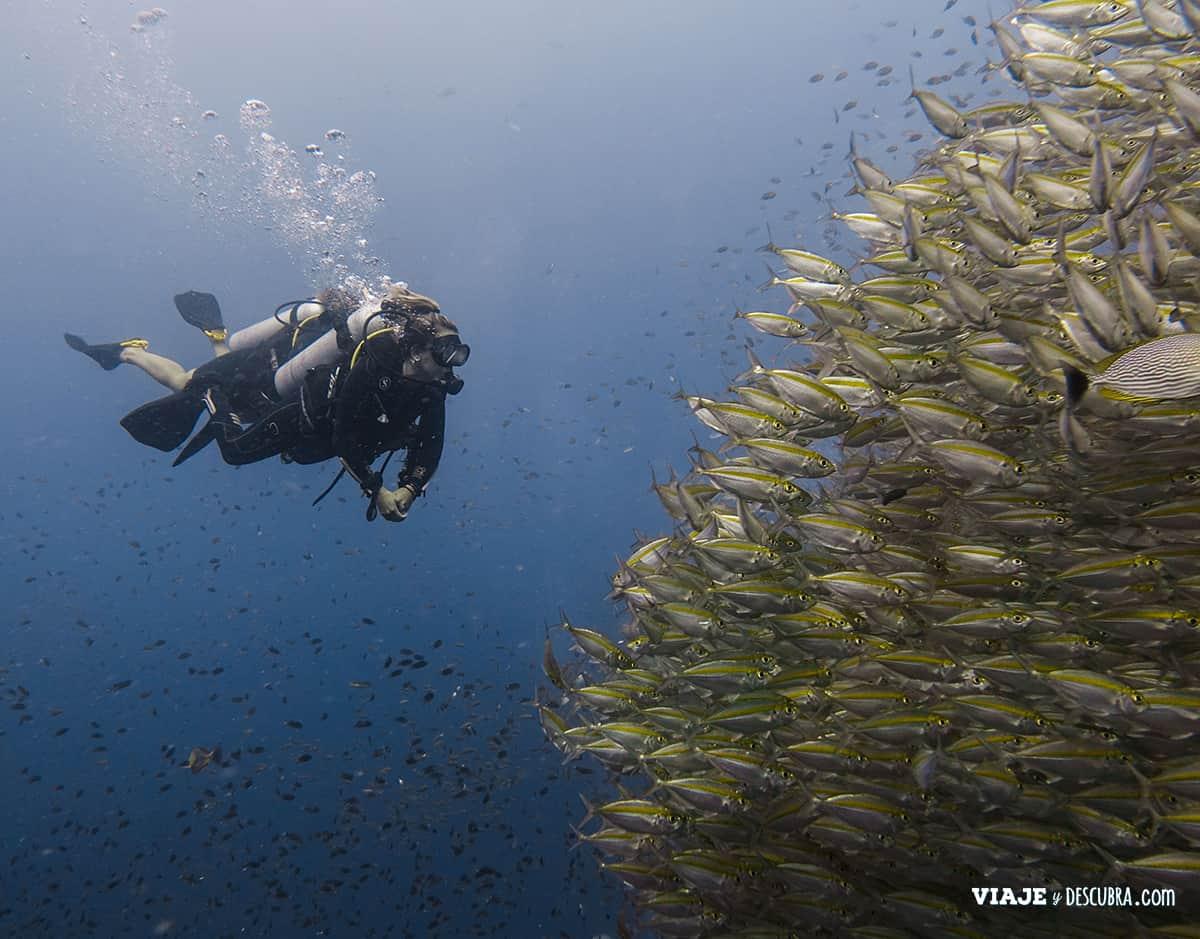 buceo,-open-water,-koh-tao,-pura-vida,-diving,-tailandia,-peces,-cardumen