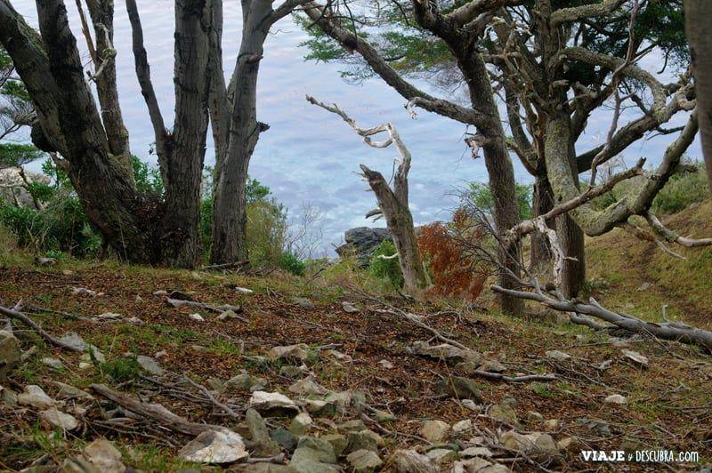 estancia-tunel,-trekking,-senderismo,-caminata,-Ushuaia,-tierra-del-fuego,-fin-del-mundo,-canal-beagle,-flora,-fauna
