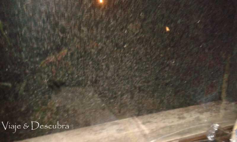 Copos desde la ventana. Foto: Flor Zaccagnino