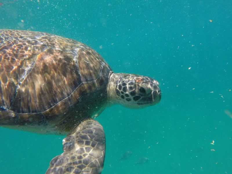 foto de nicolas cid, tartaruga, tortuga, arraial do cabo, brasil, rio de janeiro, paseo de barco