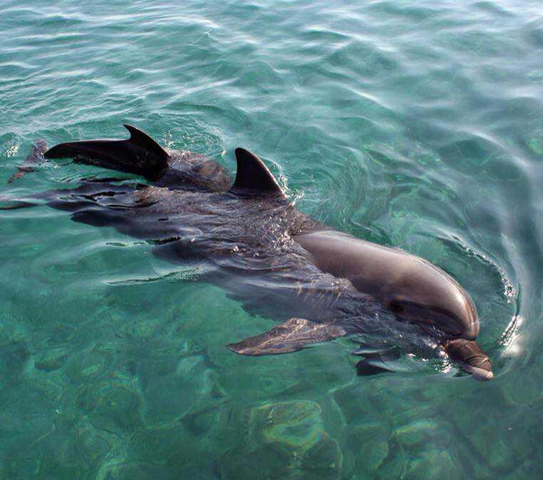 golfinhos, delfines, paseo barco pirata, florianópolis, barco, pirata, floripa, brasil