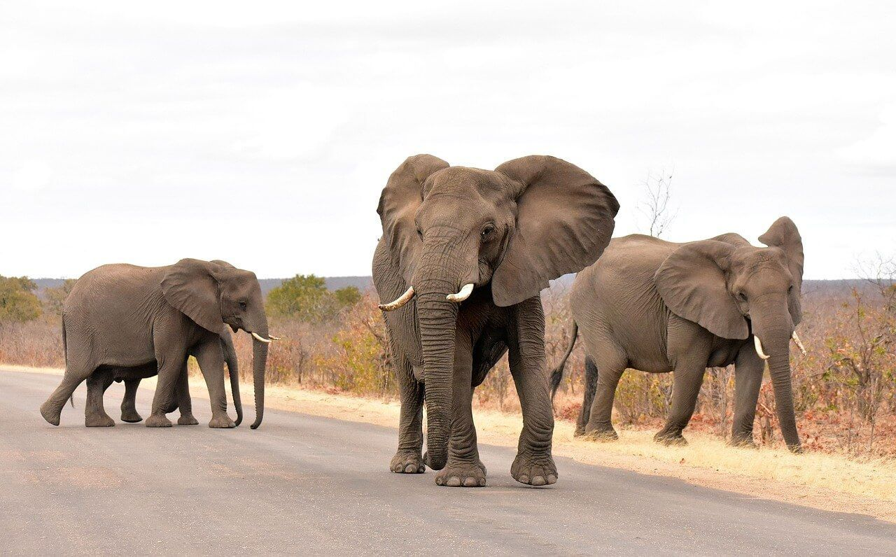 Parque Kruger en Sudáfrica.