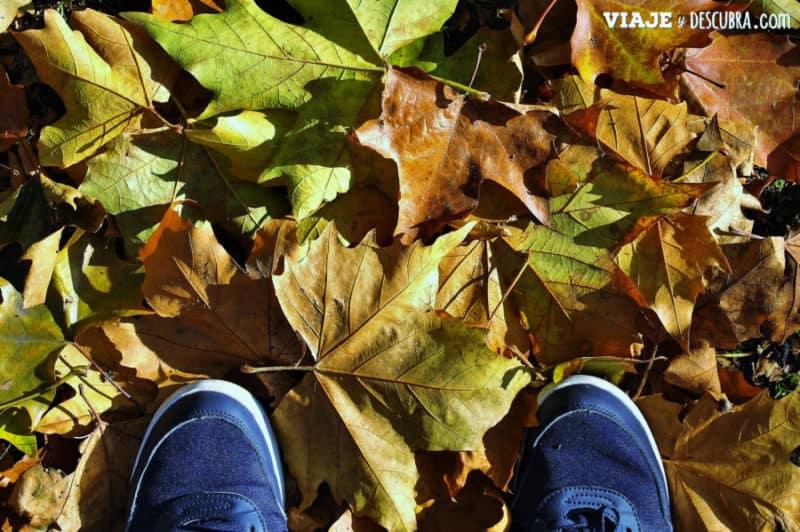 St Stephen's Green, parque, otoño, dublin, irlanda,dos días en Dublin, qué ver en Dublin, imperdibles Dublin, mapa Dublin