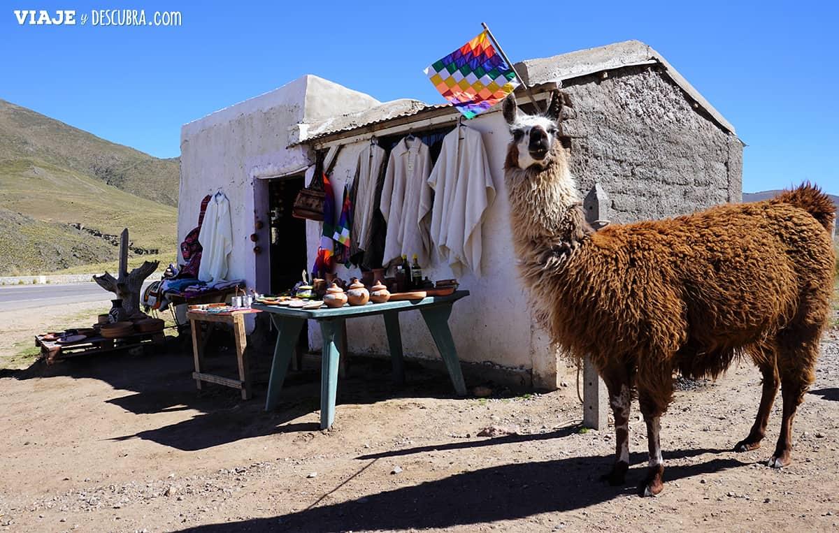 tres-dias-en-tucuman,-argentina,-norte,-noa,-viajeydescubra,-llama,--valles-calchaquies
